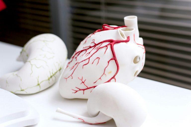 Model serca ludzkiego stworzony na drukarce 3D