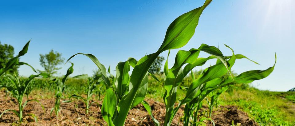 agrotechnika - nowoczesne rolnictwo